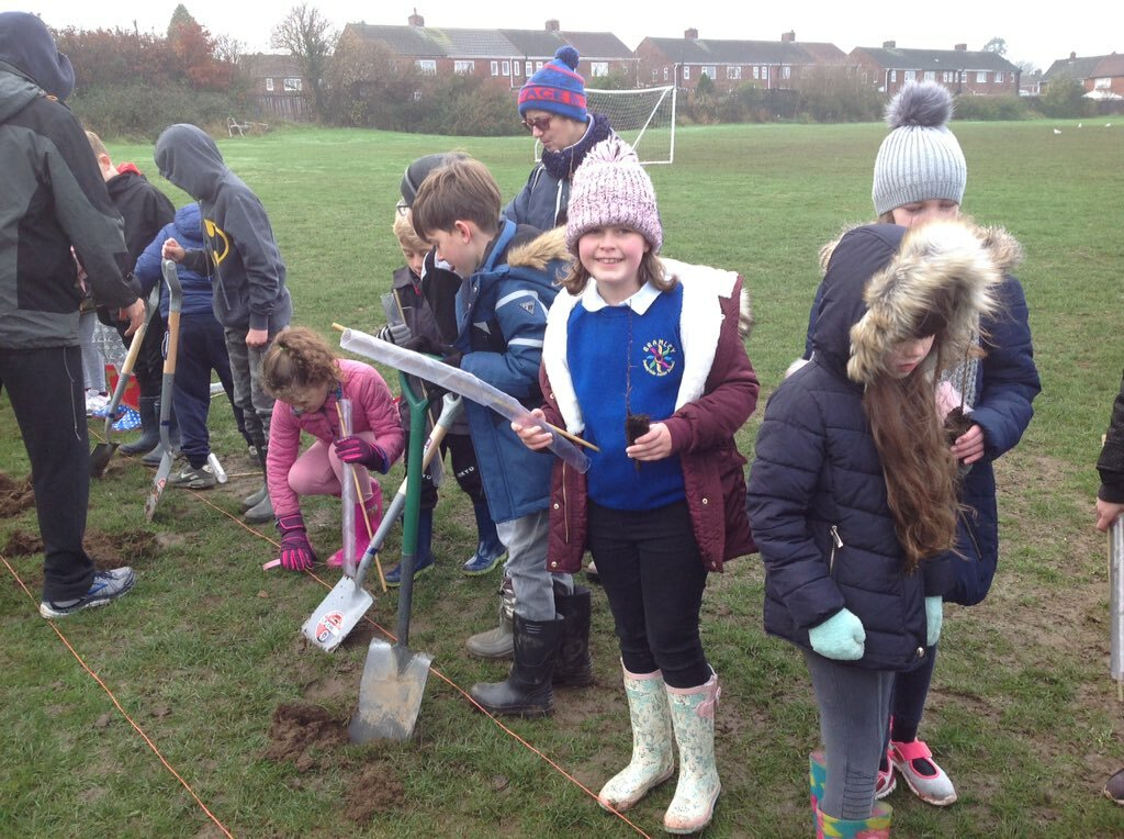 Tree Planting 7